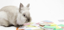 Credit Rabbit border=